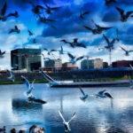 Architekturfoto Aussenaufnahme mit Vögeln